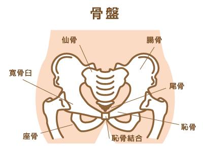 骨盤の部位(名称)